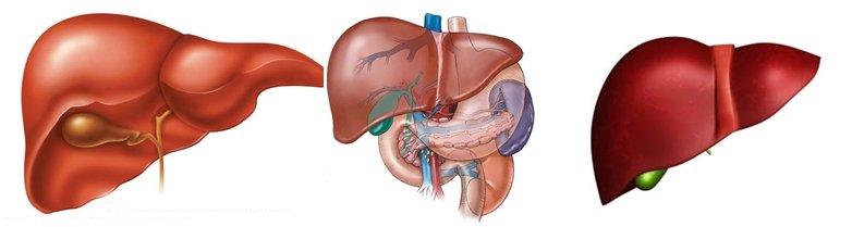 Detoxificación hepática I- Bionutrición Ortomolecular